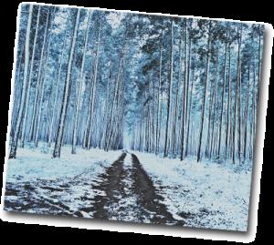 Chemin de forêt enneigé